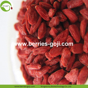 Factory Bulk Natural For Sale Wolfberries