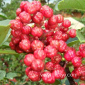 sichuan pepper red tea
