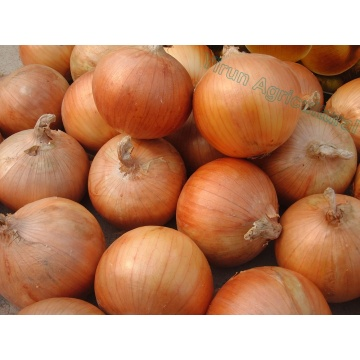 Good Taste Organic Yellow Onions