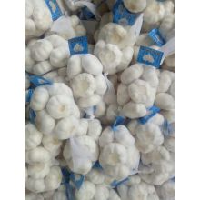 garlic material factory from jinxiang