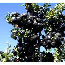 natural organic black wolfberry
