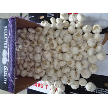 Crop 2019 Fresh Pure White Garlic