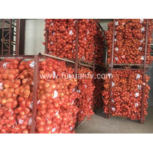 Export Fresh Yellow Onions to Israel