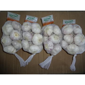 Fresh Best Quality Normal Garlic