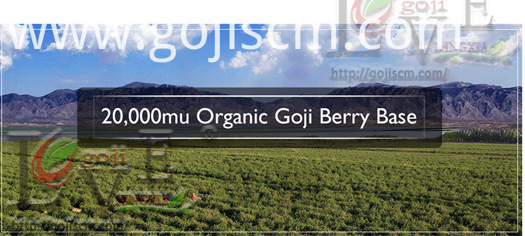Historic Goji Berry base