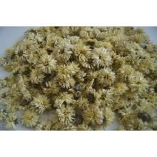 Dried Chrysanthemum flower origin