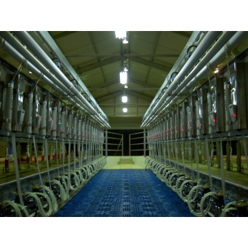 Parallel quick-release type milking parlor for cow