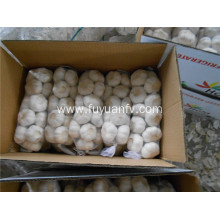 size 5.5-6.0cm pure white garlic