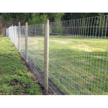 3.0mm High Quality Hot Dipped Galvanized Field Fence