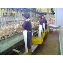 Customized for Chicken Evisceration Semi-Automatic Evisceration processing line supply to Swaziland Manufacturer