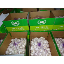 High Quality New Crop Normal White Garlic