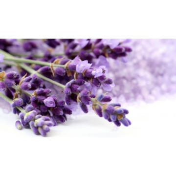 High Quality for Pure Lavender Oil,Lavender Essential Oil,Natural Lavender Essential Oil Manufacturers and Suppliers in China Lavender Essential Oil 30ml export to India Manufacturers