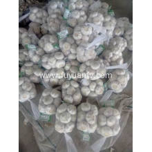 Supply for Dry Normal White Garlic Package in 500gx20/10kg  Garlic supply to French Southern Territories Exporter