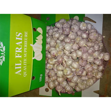 Fresh Normal White Garlic Hot Sale