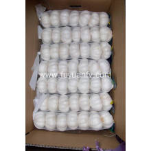Best Quality for Pure White Garlic 5.5-6.0Cm New Crop Fresh Good Quality pure white garlic export to Thailand Exporter