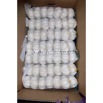 New Crop Fresh Good Quality pure white garlic