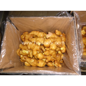 fresh ginger for sale