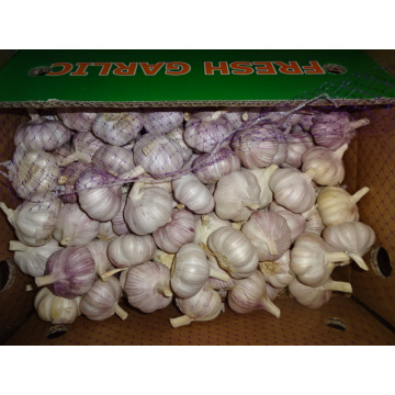 Normal White Garlic New Crop From Jinxiang