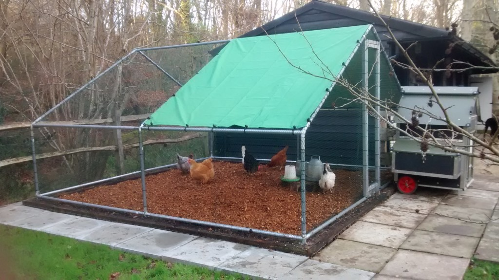 Cheap Metal Chicken Run