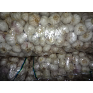 Export Normal White Garlic