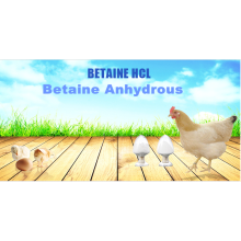 Factory price feed addittive anhydrous betaine 98%