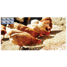 Best quality and factory for Betaine Anhydrous Animal feed anhydrous betaine CAS107-43-7 poultry feed supply to Wallis And Futuna Islands Suppliers