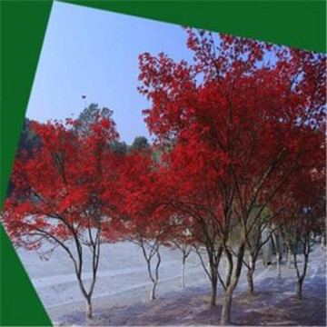 Artificial red maple tree for decoration