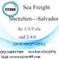 Shenzhen Port Sea Freight Shipping To Salvador