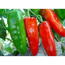 Cheaper Cayenne Pepper Sale