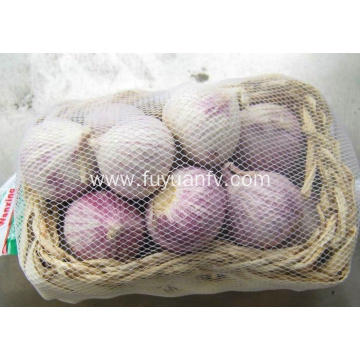 Fresh solo garlic for Export