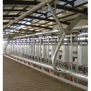 Fish type milking parlour