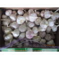 Normal White Garlic New 2019 Fresh