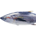 high Quality seafood Frozen bonito tuna fish