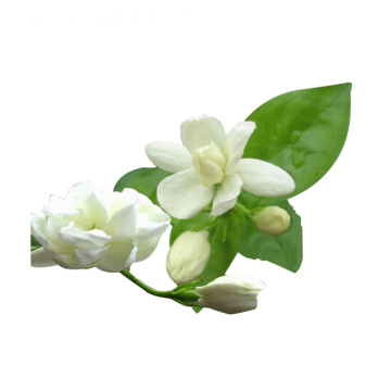 Grade A Jasmine Hydrosol Natural Plant Extract Undiluted