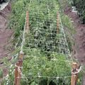 Climbing Plant Support Mesh For Vegetable