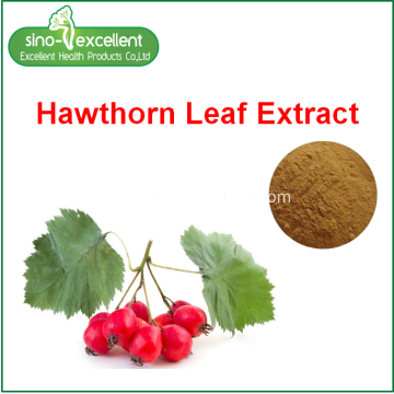 Hawthorn leaf extract powder