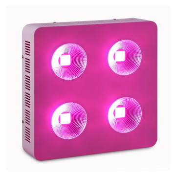 800W COB LED Grow Light til Veg & Frugt Plant