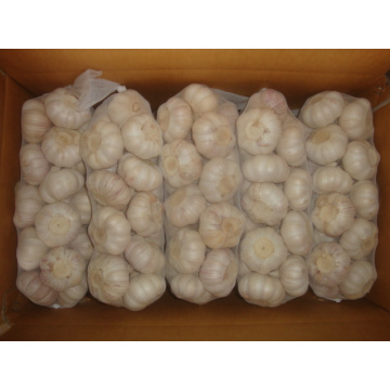 In Great Demand Jinxiang Normal White Garlic