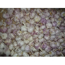 Different Sizes Fresh Normal White Garlic 2019