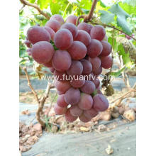 yunnan fresh red grapes