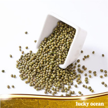 specification organic wholesale green mung bean