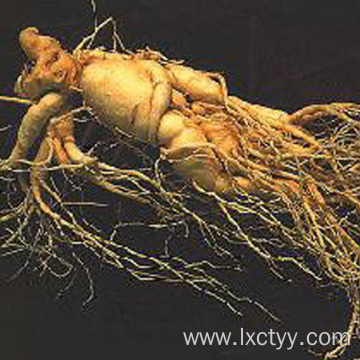 high quality panax ginseng