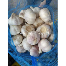 2019 new garlic started on June