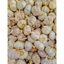 Economic crop fresh solo garlic