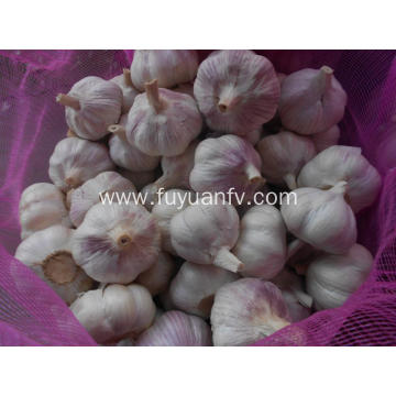 best fresh garlic price