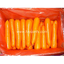 Fresh Carrot M size