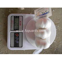 Economic crop pure white garlic