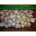 Fresh Regular White Garlic Price