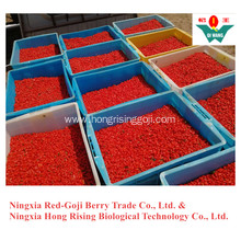 New Crop Fresh Goji Berry Wolfberry