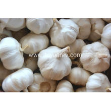 2018 new crop garlic pure white garlic price